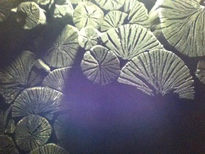 Charcoal Room, 31°C