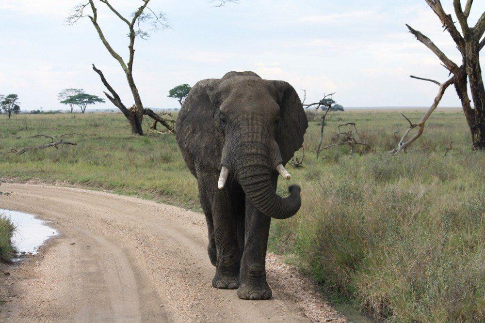 african safari itinerary