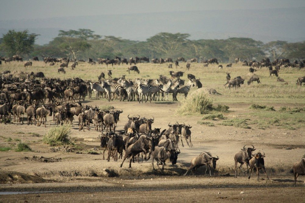 africa itinerary the great migration