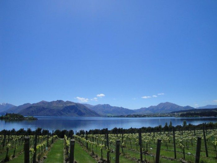 wanaka vineyards