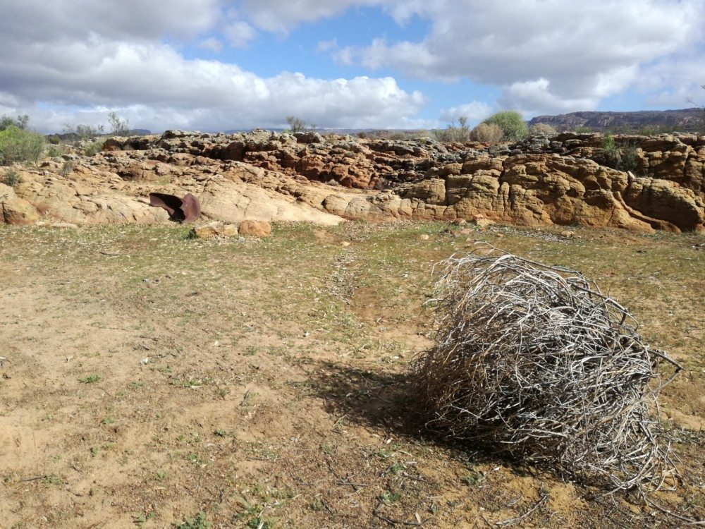 cederberg tumbleweed