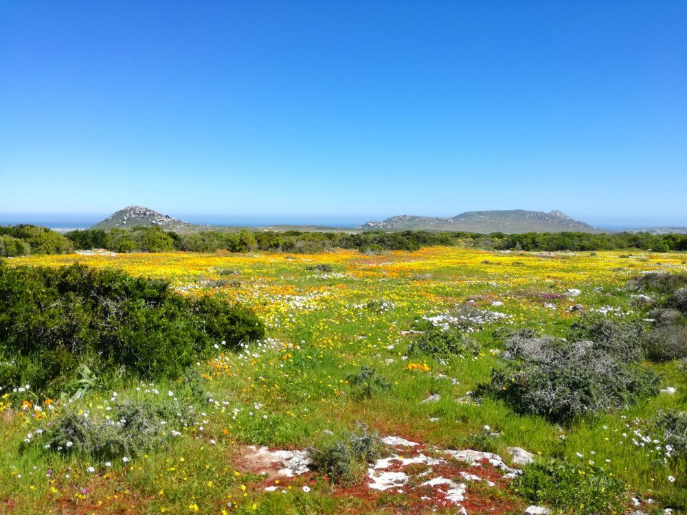 postberg section flower viewing