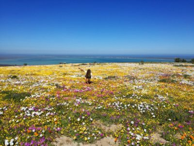 Spring Blooms in West Coast National Park