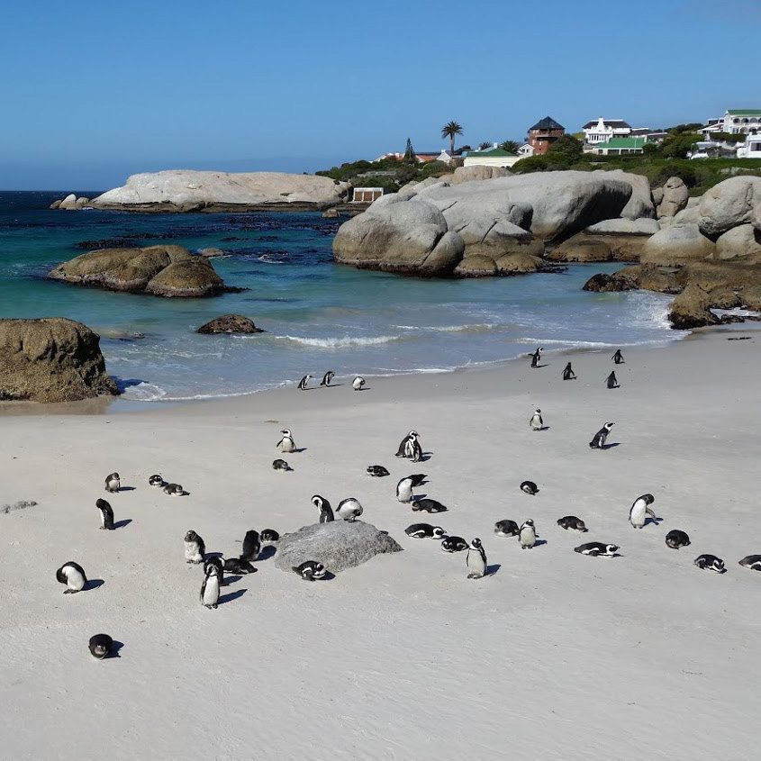 where to see penguins in cape town